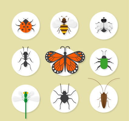 9 exquisite insect icon vector material