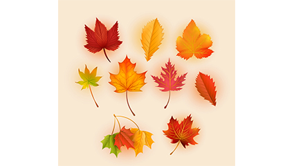 9 exquisite autumn leaves vector material