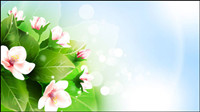 Beautiful flowers vector material -2