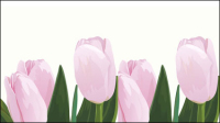 Pink tulips vector material