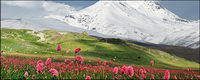 Snow-capped mountains of flowers picture material