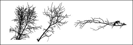 Withered branches of the material